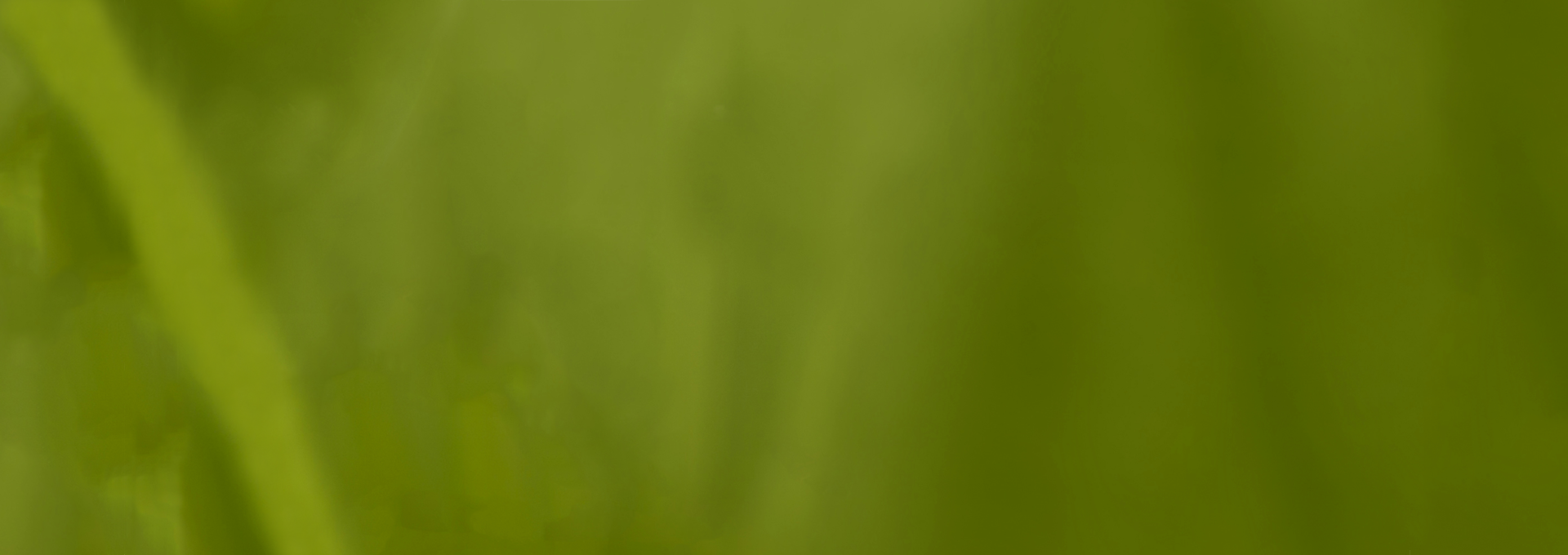 Sfondo-verde